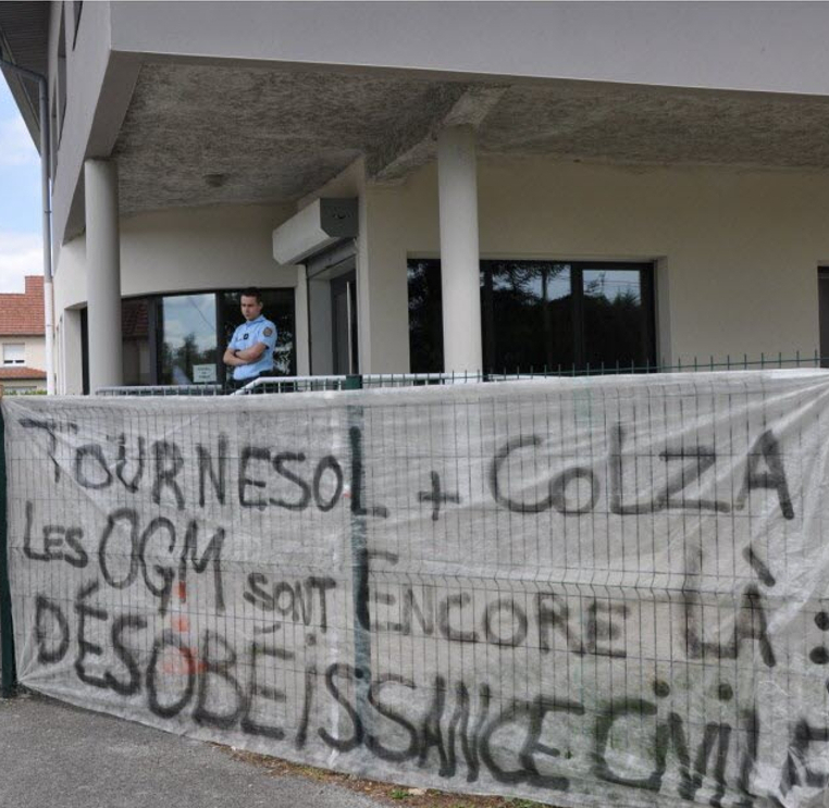 Tournesol et colza, les OGM sont encore là : désobéissance civile !