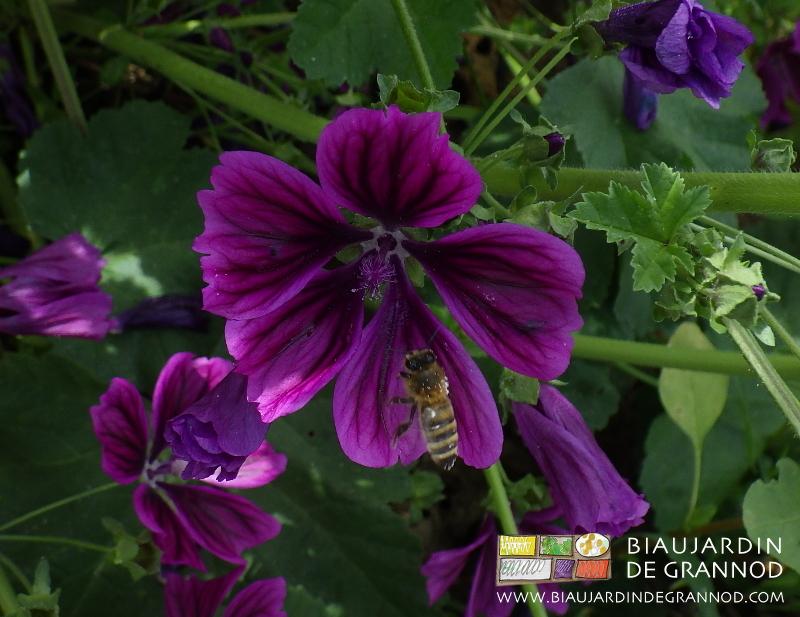 Un jardin de fleurs biau jardin de grannod for Un jardin de fleurs