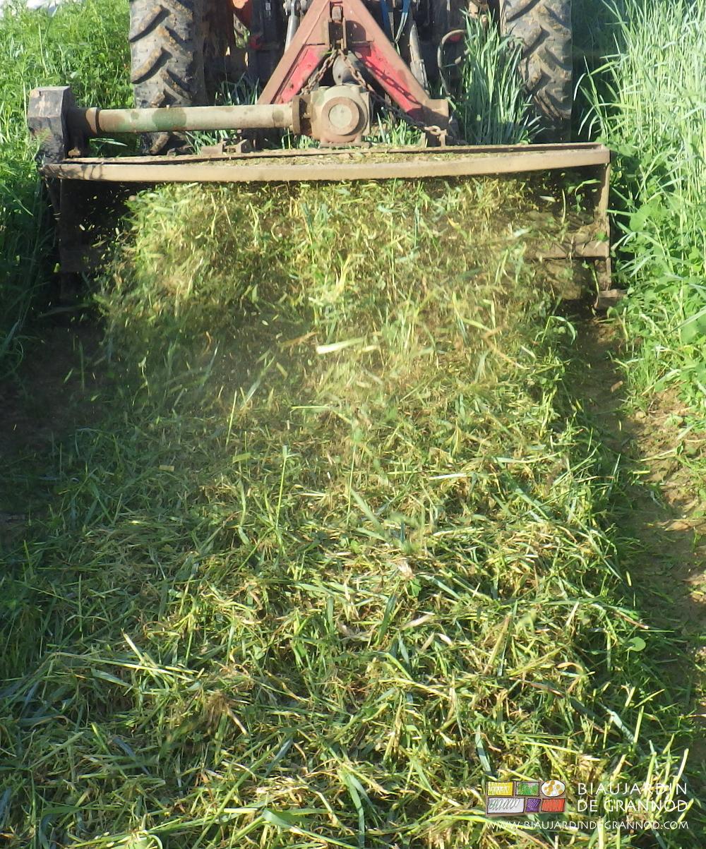 Le broyeur, outil indispensable pour l'incorporation des engrais verts, mais outil dangereux pour la faune...