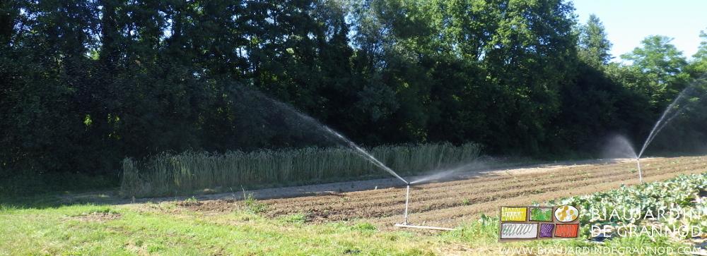 arrosage par asperseurs à bas débit pour économiser la ressource en eau
