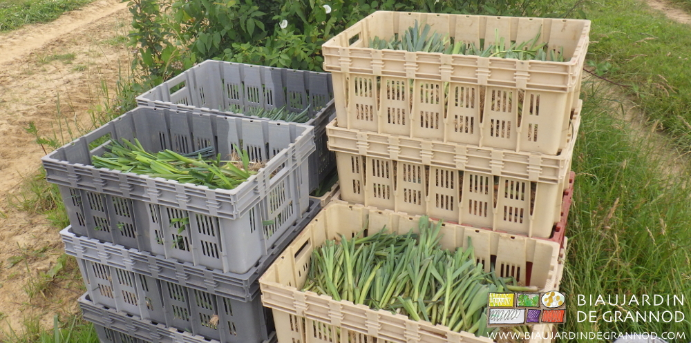 Les Biaux Jardiniers auto-construisent leur plant de poireau.