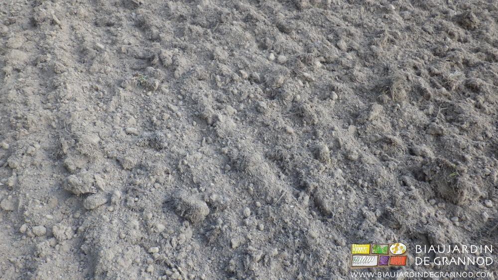 Deux passages de disques crénelés ont été suffisants pour pouvoir semer l'engrais vert après le chantier de drainage.