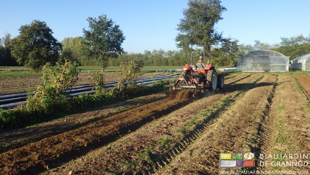 Reprise de planche permanente après récolte par un passage de cultibutte.