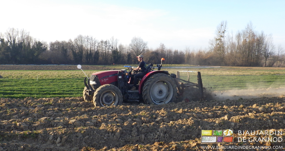 Action du roloflex pour éviter que les racines d'engrais vert ne redémarrent.