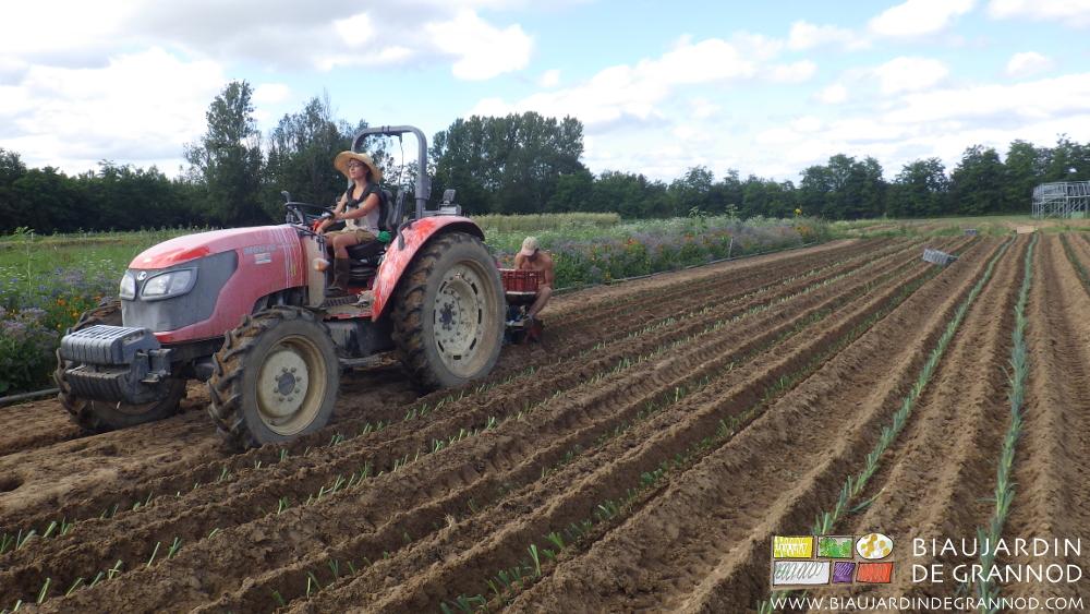 Répartition des postes de travail à parité pour la plantation mécanisée de poireau