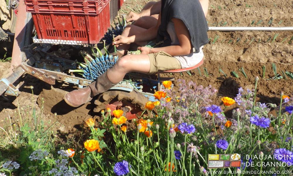 Cohabitation planteuse à pinces et bande fleurie.