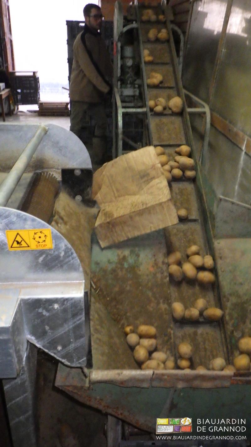 préparation de pomme de terre par brossage