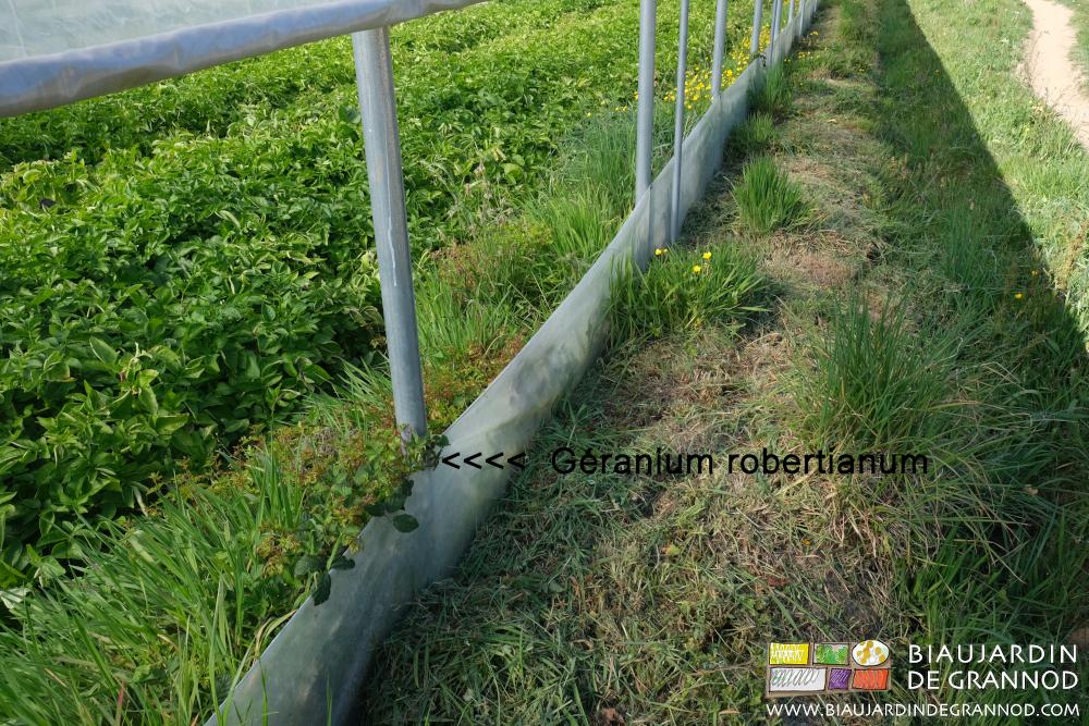 Fauche alternée des bords de tunnels pour toujours garder un milieu favorable aux insectes.