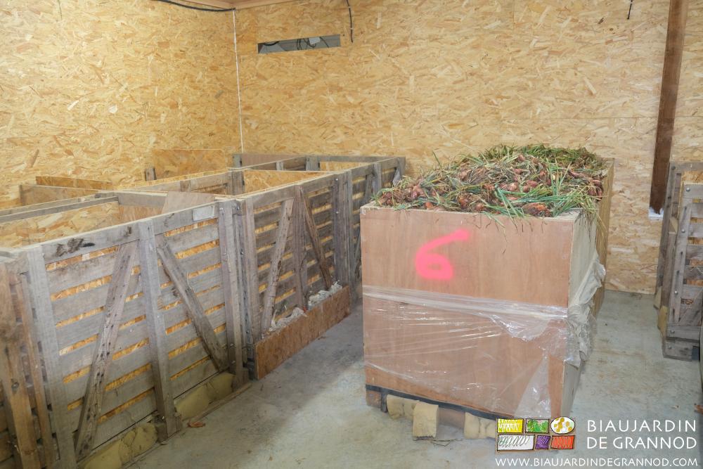 Séchage de la récolte d'échalote par ventilation dynamique.