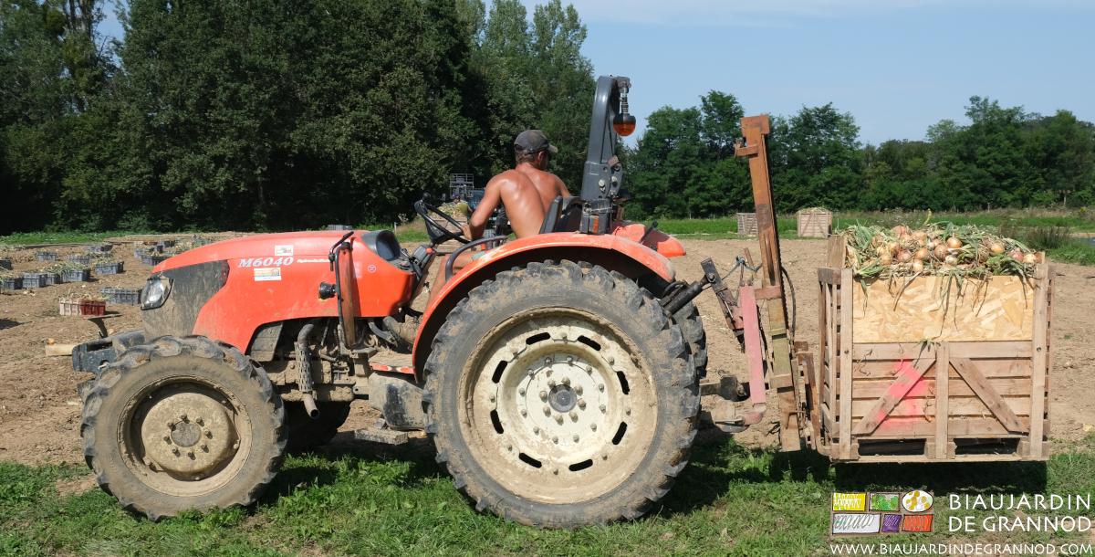 Manutention des palox grâce à la fourche lève palettes du tracteur.