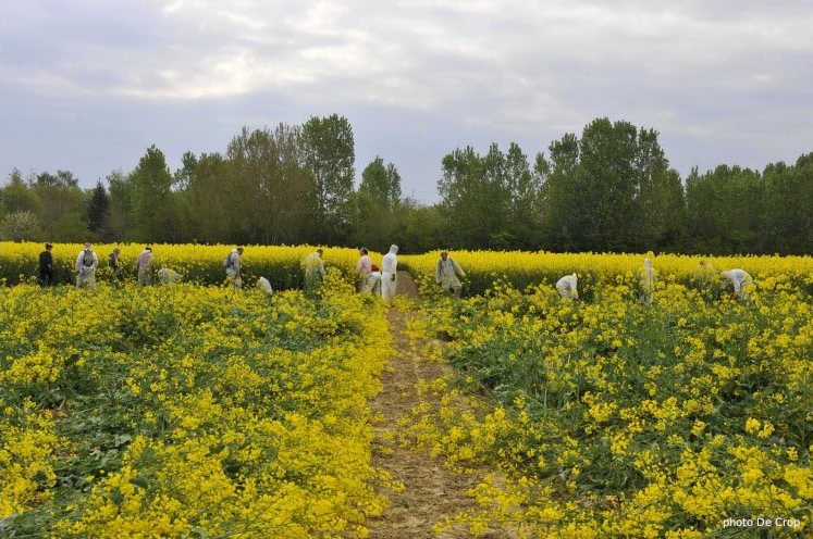 photo g de crop