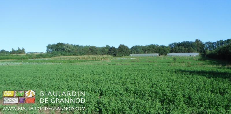 Rotation à base d'engrais vert pluri-annuels = fertilité durable auto-produite