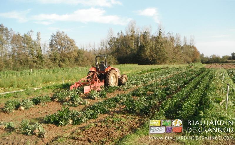 passage de la souleveuse pour la récolte