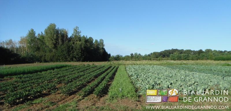 De G à D : carré d'ombellifères fenouil, cèleri-rave / bande fleurie / carré de chou