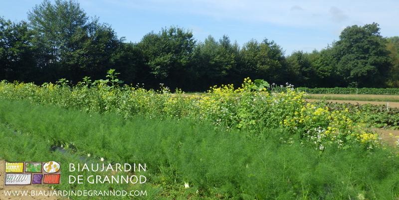 valorisation de la biodiversité (haies bocagères, bandes fleuries) plutot que maraîchage intensif.