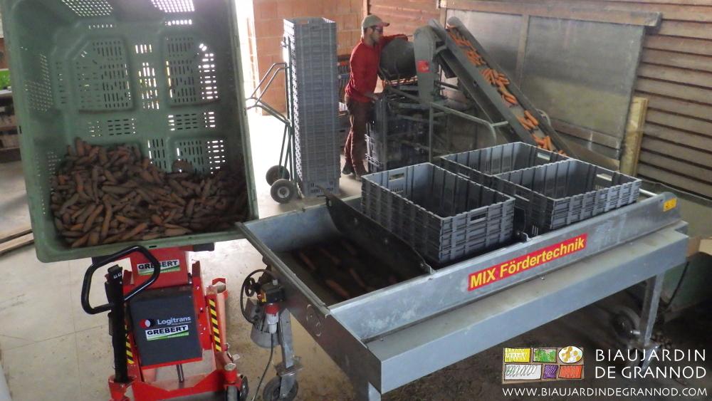 Préparation des carottes sans utillisation d'eau potable