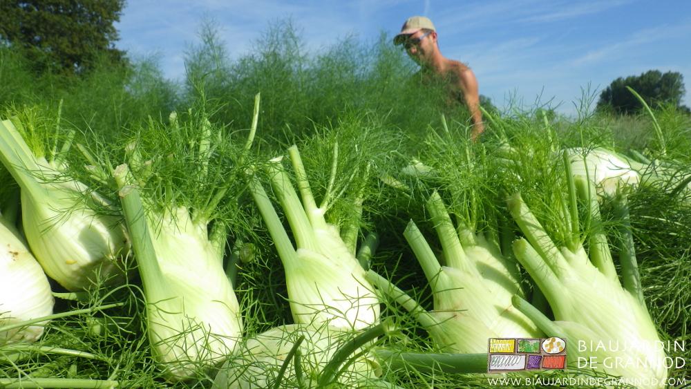 Récoltes possibles sur de nombreux mois