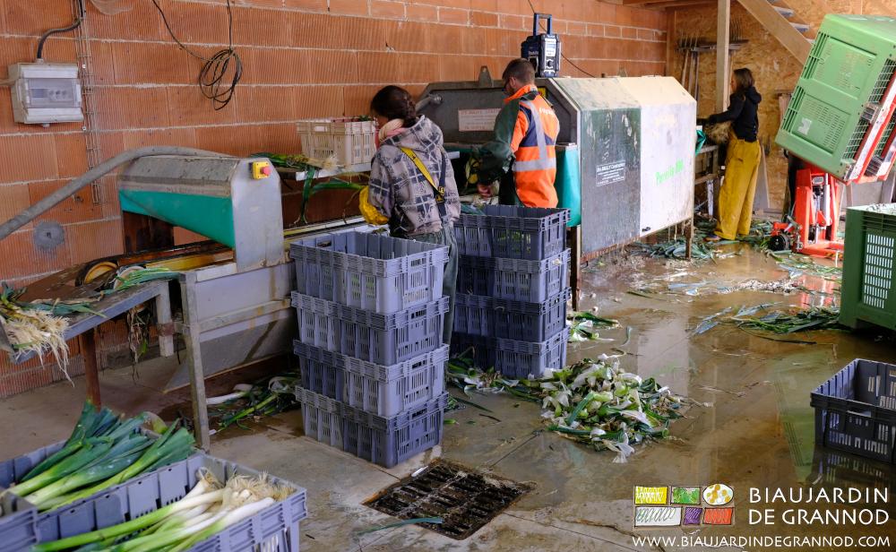 L'équipe des Biaux Jardiniers se mobilise pour la préparation des poireaux.