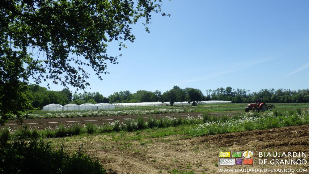 Une ferme marîchère pleine de biodiversité, pour un panier diversifié.