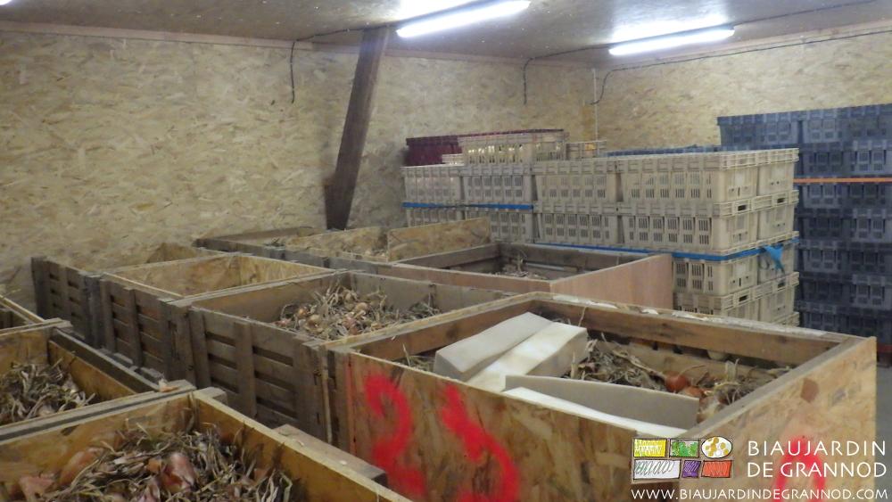 Local de séchage / conservation pour échalote et oignon.
