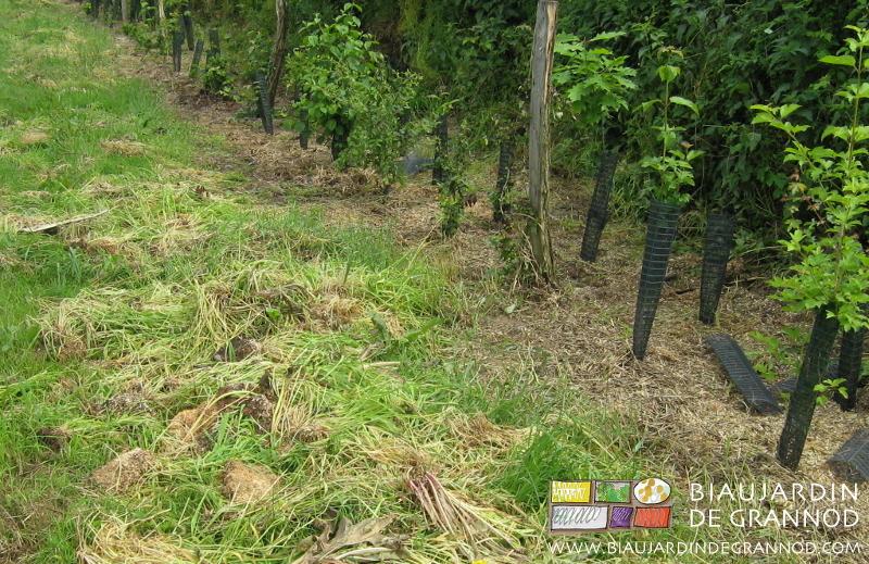 Plantations et entretien biau jardin de grannod for Jardin entretien jean paul traineau