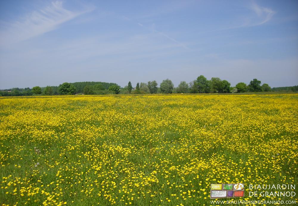 La prairie de Seille au dessous du Biau Jardin de Grannod