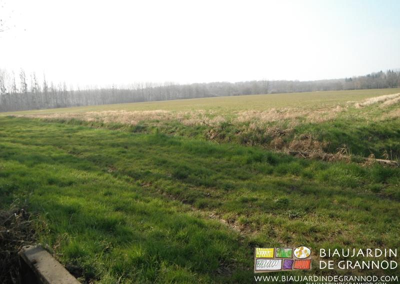 En prairie, parcelles traditionnellement destinées au paturage tardif ou à la fauche tardive