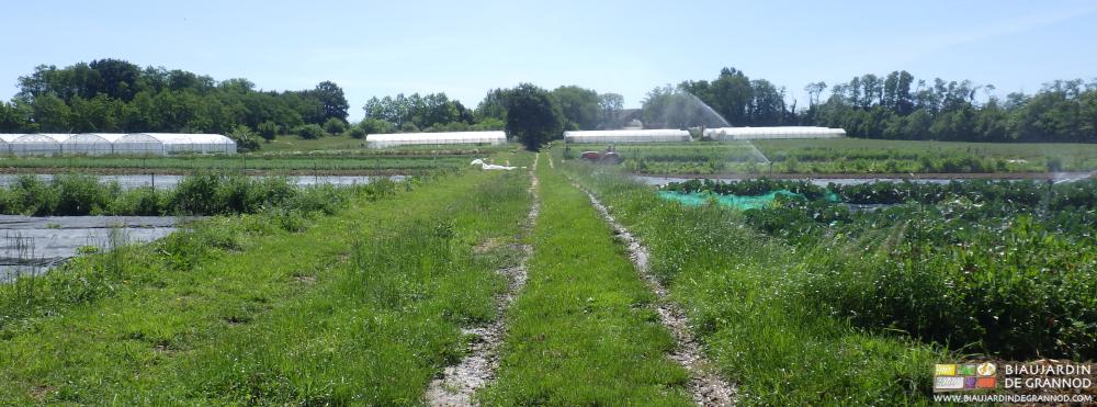La fauche alternée des allées contribue à la préservation des insectes auxiliaires.