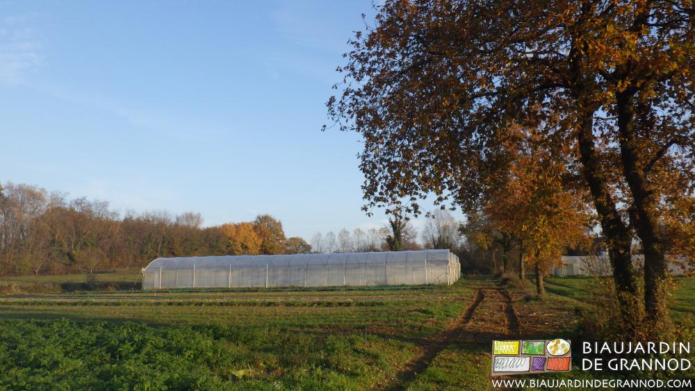 Maintien d'arbres isolés à coté des planches carrés de légumes ou près des tunnels.