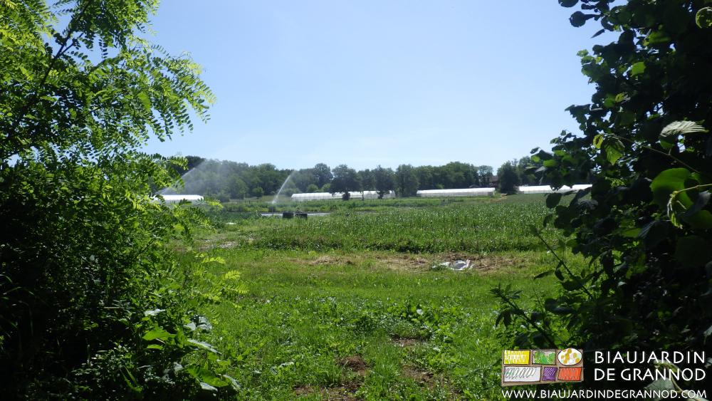 Un jardin maraîcher extensif intégré dans un milieu rural diversifié.