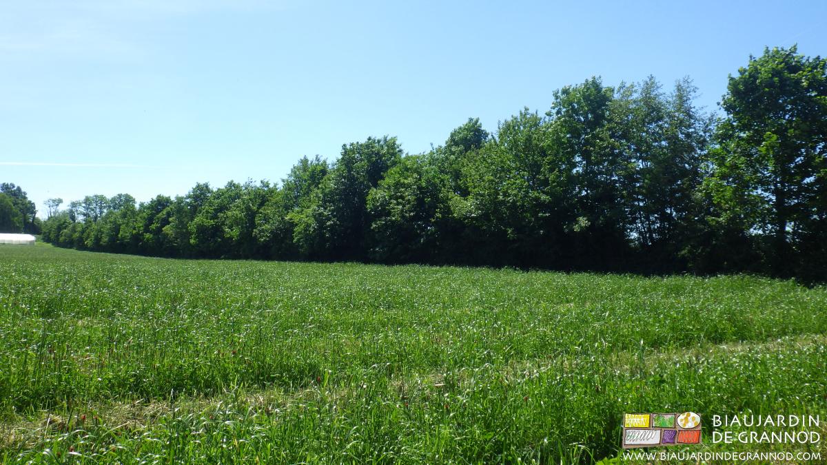 Haie bocagère plantation hiver 2006/2007