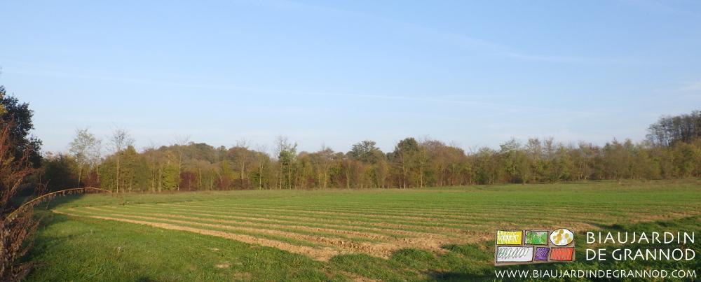 Haies diversifiées d'arbres feuillus de pays en mélange autour du Biau Jardin de Grannod.
