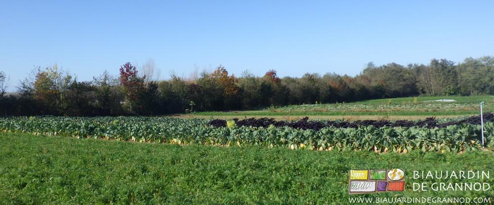 Haies bocagères récentes ou anciennes tout autour de notre Biau Jardin de Grannod