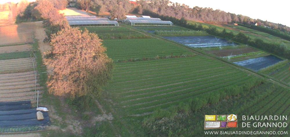 En permanence autant de planches valorisées en engrais vert que de planches valorisées en légume.