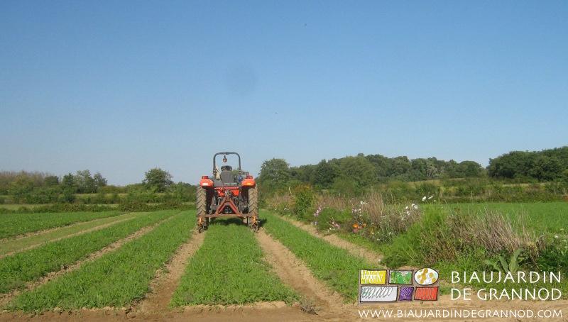 entretien des allées dans les engrais verts avec les éléments parallélogramme