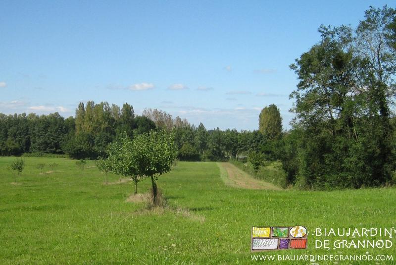 Plantations et entretien biau jardin de grannod for Plantations jardin