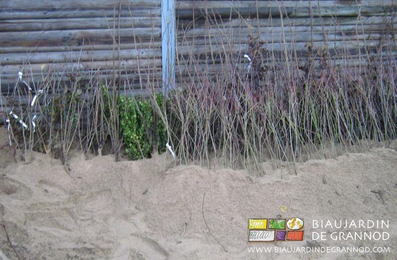 conservation des plants en jauge de sable pour une bonne reprise
