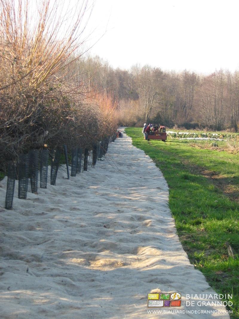 plantation bocagère = obstination