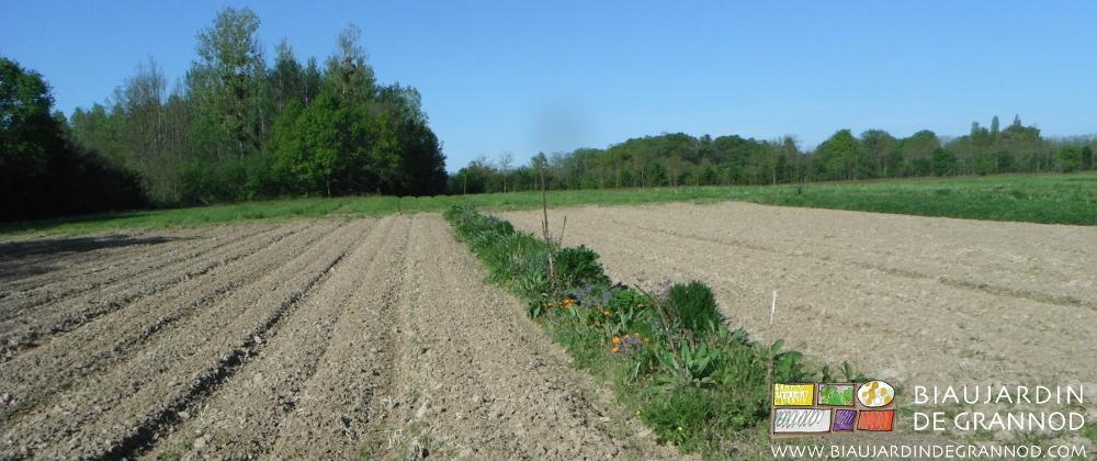 Bande fleurie entourée planches permanentes de sol nu prêtes à être plantées et semées.