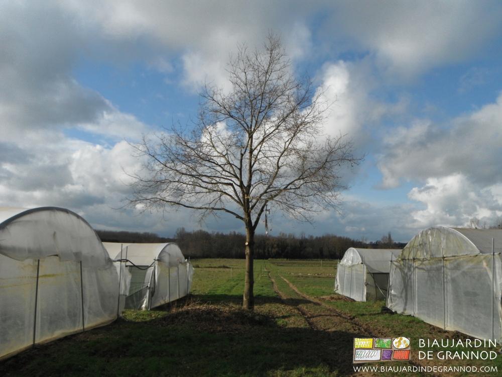 Des arbres isolés ppour fvoriser la biodiversité, même à coté des tunnels.