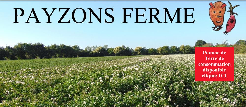CLIQUER pour visiter le site PAYZONS FERME ! association de producteurs de plant de pomme de terre et échalote.