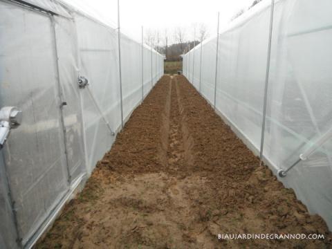 préparation manuelle du sol avant semis d'engrais vert de couverture