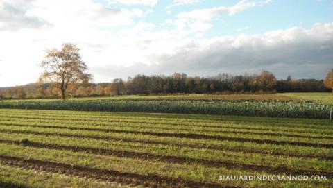 sol couvert par les légumes ou les engrais verts au Biau Jardin de Grannod