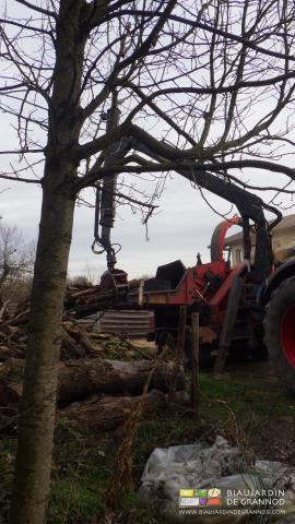 La plantation d'arbres isolés aussi est compatible avec l'auto-production paysanne de plaquette fermière.