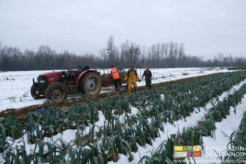 La récolte des poireaux, çà réchauffe, même sous la neige : Charline en a posé l'anorak (bleu) !