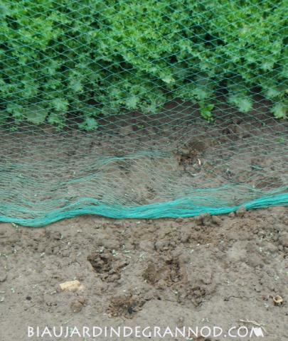 traces d'onglons de chevreuil