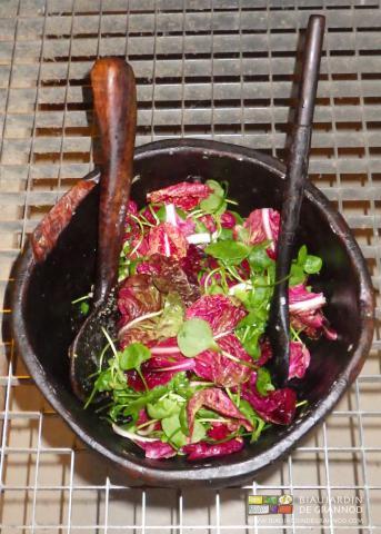 Salade mélangée rouge de Vérone / claytone de Cuba